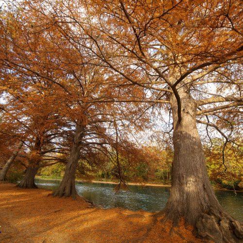 Autumn's Last Glory